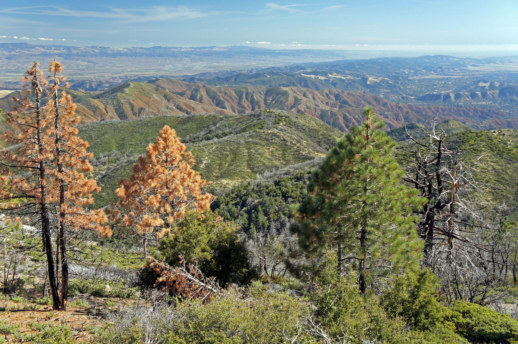 Ventana Wilderness, California