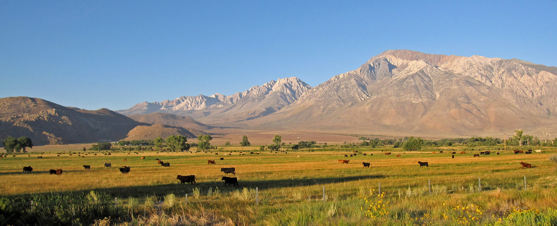 Basin Mountain, Mount Tom and the eastern Sierra north of Bishop, CA