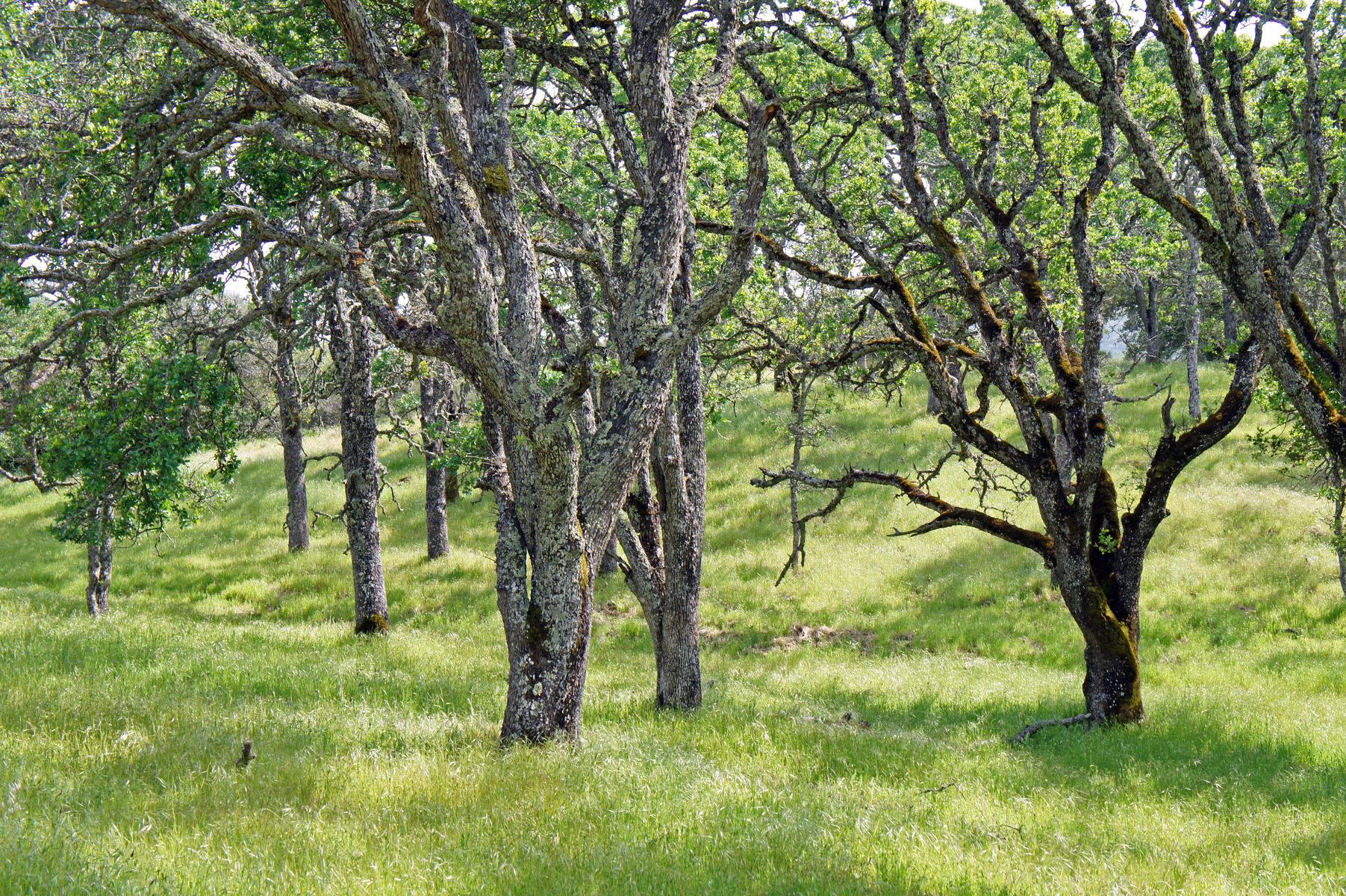 Morgan Territory, north of Livermore, California
