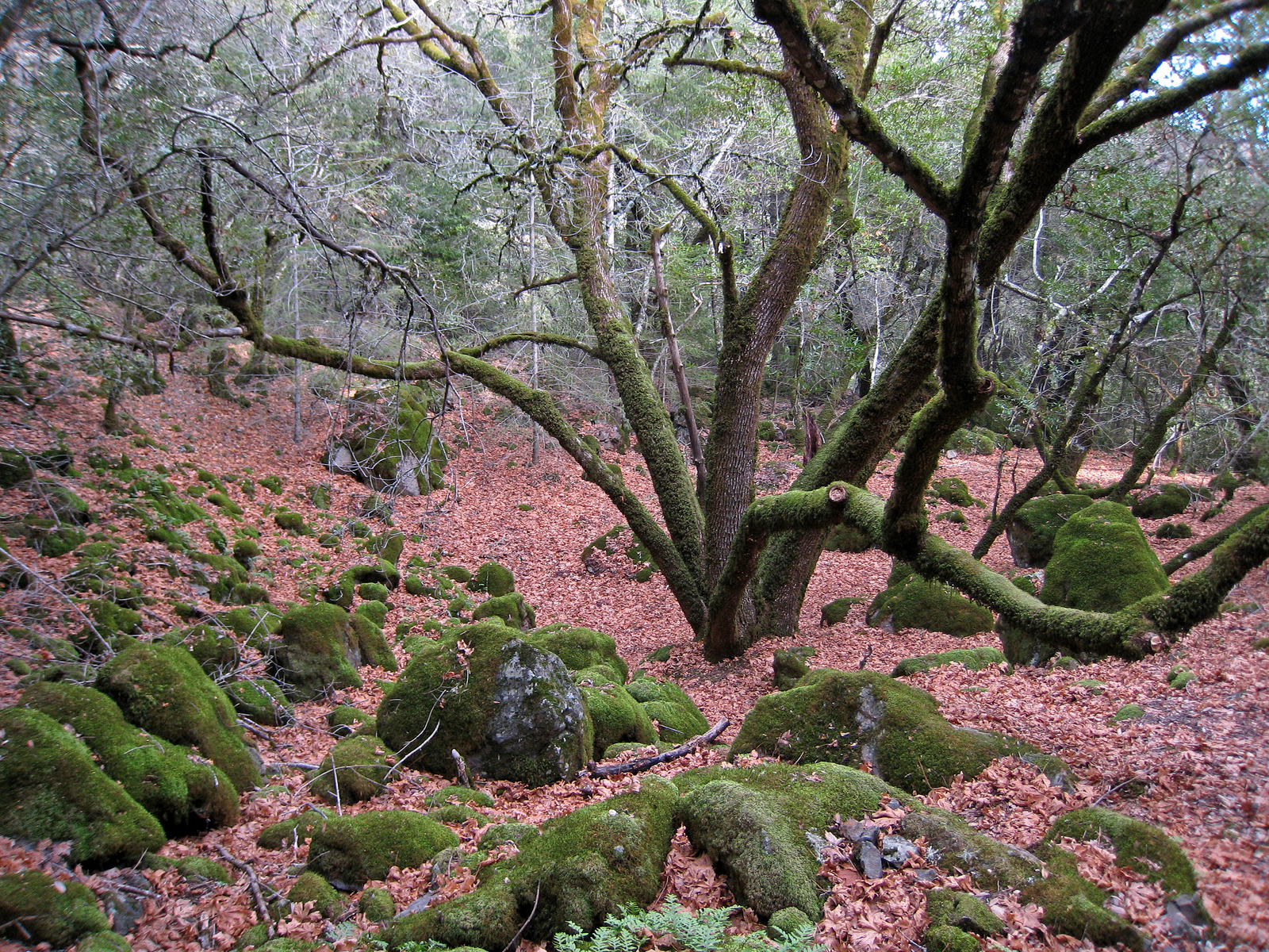Sugarloaf Ridge State Park, Sonoma County, California