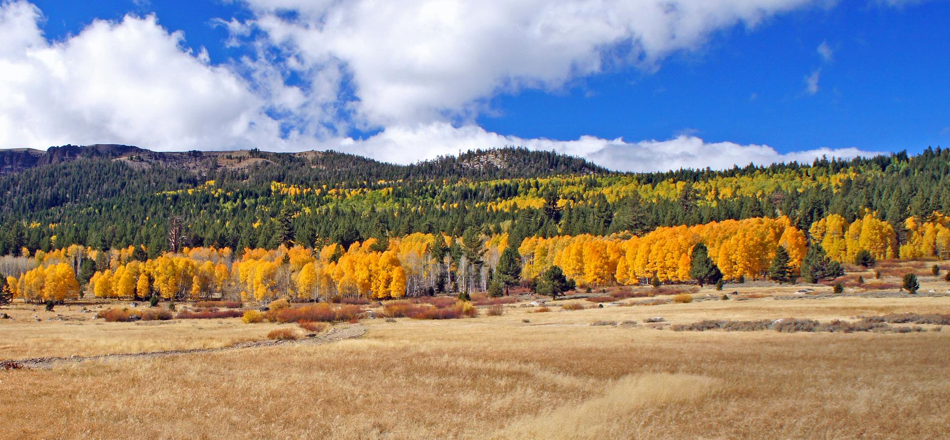 near Carson Pass, south of Lake Tahoe, California