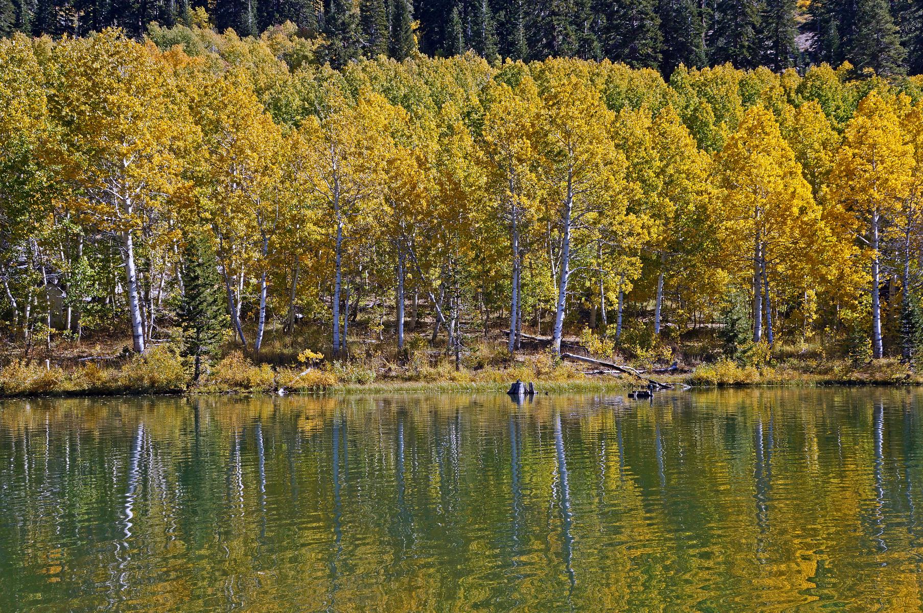 Marlette Lake, east of Lake Tahoe, Nevada